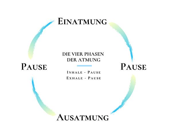 4-Phasen-der-Atmung